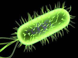 vi khuẩn lao