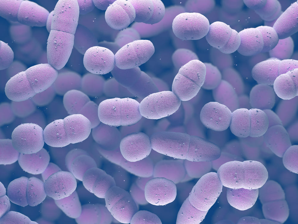 vi khuẩn phế cầu