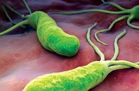 vi khuẩn HP