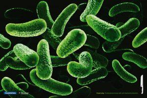 vi khuẩn dịch hạch
