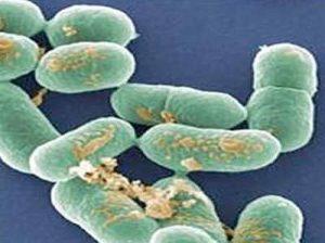 vi khuẩn lỵ