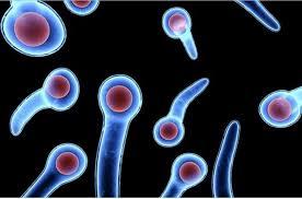 vi khuẩn uốn ván và nha bào